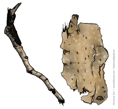 Bark-and-Stick-Studies-1